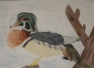Molly Rickert of Bloomington, Illinois, entered her colored pencil drawing of a wood duck in the 7th-9th grade category and earned a second place award at the national Junior Duck Stamp Competition.